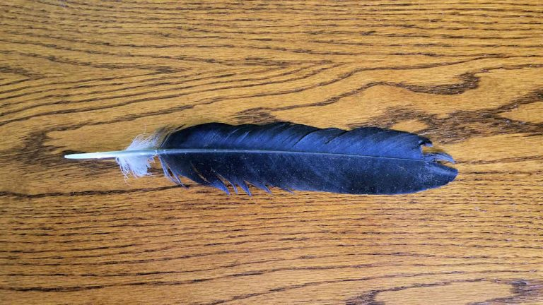 The Raven Feather